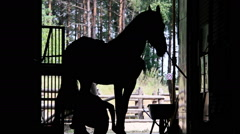 People caring for a horse, silhouette Stock Footage