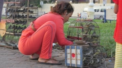 Woman moves birds from cage to cage,Phnom Penh,Cambodia Stock Footage