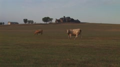 View of Cows in Pasture Stock Footage