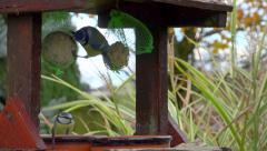 Bird feeders - Little wood house - birds, passerines, sparrow, tit - Close up 2 Stock Footage