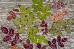 Autumnal background texture. photo of leaves on wood Stock Photos