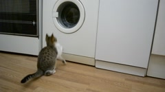 Small cat watches a working washing machine Stock Footage