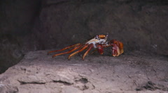 Crab Crayfish in the Rocks Slowmotion Stock Footage