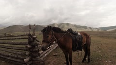 Stock Video Footage of little Mongolian horse with a saddle and harness next to a wooden fence on a