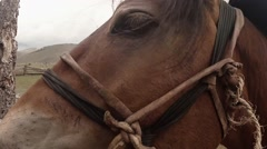 Horse head close up with a bridle on a background of an old wooden fence Stock Footage