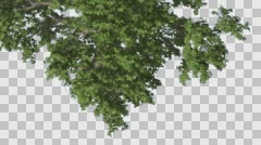 Broadleaf Top of The Tree Turned Image Tree is Swaying at The Wind Green Tree Stock Footage