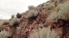 sagebrush bushes, trees in rocky mountains live camera - stock footage