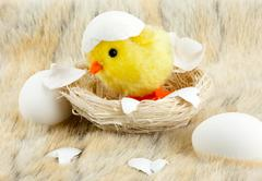 Toy baby chicken with eggshell - stock photo