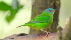 Tropical green bird standing still Stock Footage