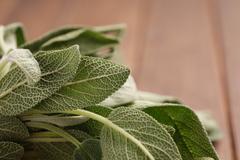 Fresh Sage Bundle - stock photo