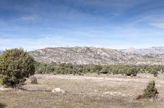 Holm Oak and Juniper dehesa - stock photo