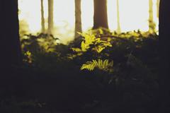 Brugge, Detail of fern in sunlight Stock Photos