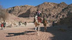 Camel in Petra, Jordan Stock Footage