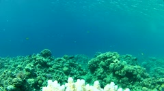 Ordinary sea.mp4 - stock footage