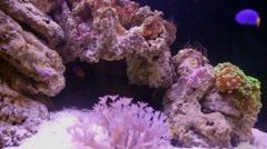 Different fishes and invertebrate animals in marine aquarium. Stock Footage