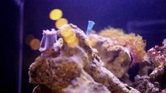 Coral, fishes and invertebrate animals in marine aquarium. - stock footage