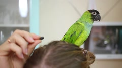 Parrot sits at woman head and eats sunflower seed. Stock Footage