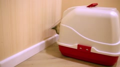 Grey cat leaves covered litterbox standing in corner of corridor. Stock Footage