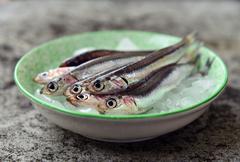 Fresh raw european anchovies on ice Stock Photos