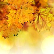 Stock Illustration of Fall maple leaves