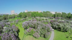 Lilac Garden with citizens at spring sunny day. Aerial view Stock Footage