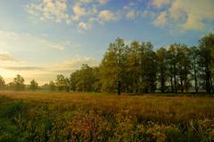 Netherlands, Groningen, Haren, Glimmen, Autumn landscape with uncultivated field Stock Photos