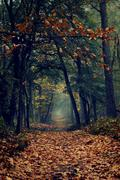 Nethrlands, View along footpath in forest covered with fallen leaves Stock Photos