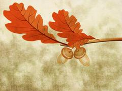 Oak leaves with two acorns Stock Illustration