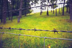 Close up on barb wire with trees in background - stock photo