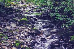 Water streaming through woodland - stock photo