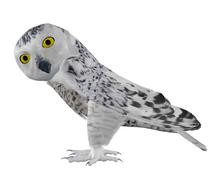 Snowy owl - stock illustration
