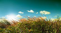 Blue sky and vegetation - stock photo