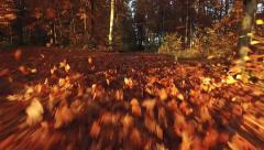 Autumn leaves in the wind Stock Footage