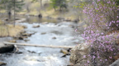 Stock Video Footage of Flowers on a mountain river and rolling over the bridge person