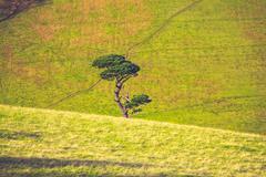 Single tree growing amongst rolling green hills - stock photo