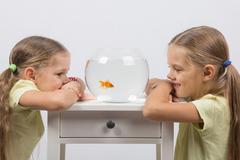 The girls watching the behavior of goldfish Stock Photos