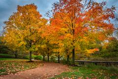 Stock Photo of USA, Illinois, Chicago, Chicago Botanic Garden, Footpath running between trees