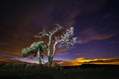 Trees under starry sky Stock Photos