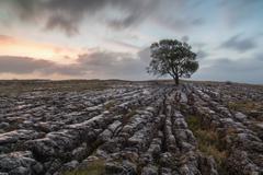 UK, England, Yorkshire, Malham Ash at Sunrise - stock photo