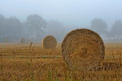 Germany, Lower Saxony, East Frisia, Field in fog Stock Photos