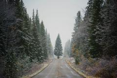 Canada, Alberta, Symmetrical view of road and pine trees in winter - stock photo