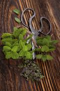 Mentha. Aromatic culinary herbs, mint. Stock Photos