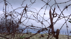 Rusty barbed wire labyrinth. Old battlefield, history war site. Background. Stock Footage