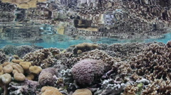 Coral Reef Diversity in Shallow Water - stock footage