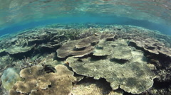 Healthy Coral Reef in Tropical Pacific Stock Footage