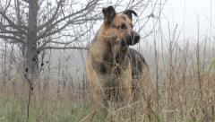 View of a hunting dog watching Stock Footage