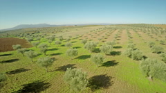 Olive Grove in Vinhais, Portugal Stock Footage