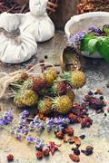 Harvesting medicine herbs Stock Photos