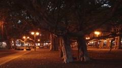 Banyan trees, Lahaina, Maui, Hawaii, night Stock Footage