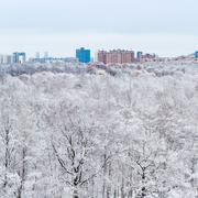snow oak trees in woods and city in winter day - stock photo